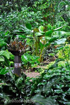 Tabu: paradis tropical à Cairns, Queensland - Jardin du Queensland - Bali Garden, Balinese Garden, Lush Garden, Garden Care, Shade Garden, Garden Pots, Garden Ideas, Small Tropical Gardens, Tropical Garden Design
