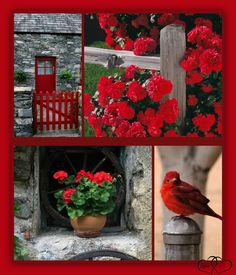 by Linda Hay Shabby Chic Colors, Montreal Botanical Garden, I See Red, Color Collage, Beautiful Collage, Pallet Painting, All Nature, Red Barns, Colorful Garden