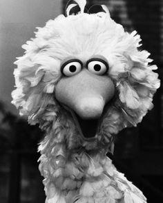 The Muppet Master Encyclopedia 90s Childhood, Childhood Memories, Jim Henson Puppets, Die Muppets, Sesame Street Muppets, Oldies But Goodies, Big Bird, 90s Kids, Favorite Tv Shows