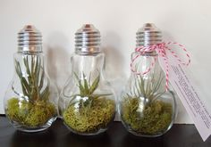 Silver Set of 3 Light Bulb Terrarium  3 Air by OpticalConclusions
