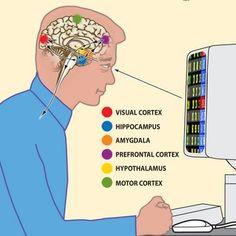 Infographic - brain en social media