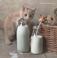 Tom and Jerry ❢by Elena Eremina on 500px