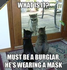 What Is It? Must Be A Burglar He's Wearing A Mask | Click the link to view full image and description : )