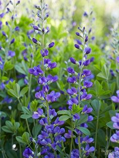 The 15 Most Underused Perennials | Better Homes & Gardens