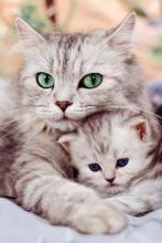 Maman et Kitten | Salut-Look en ligne