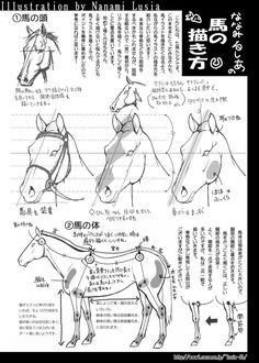 How to Draw: 10 Ways To Draw Horses! Pencil Drawings Of Animals, Horse Drawings, Animal Sketches, Anatomy Reference, Art Reference, Horse Anatomy, Animal Anatomy, My Little Pony Drawing, Art Graphique