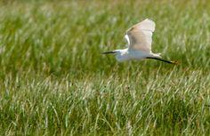 Flight in the wetland by Jordi Rispau on 500px