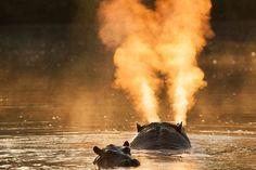 Hippo spray