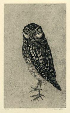 Burrowing Owl Original Etching black by stephaniemartinart on Etsy