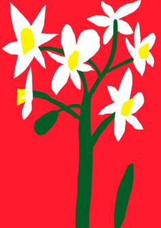 Antti Kalevi, White Flower on Red Background, 2015