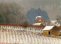The church of Montigny les Arsures (Capitale du Trousseau), #Jura.  Wineybrett's Photo Blog Photo Blog, Wines, France, House Styles, Places, Outdoor, Food, Law School, Outdoors