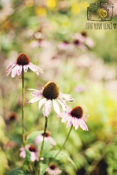 Flower Photography, Cottage Gardens, Photography For Beginners, September 2014, Flowers, Plants, Beautiful, Flower Photos, Plant