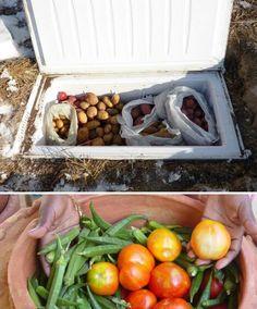 Bury the cooler for an outdoor cellar.