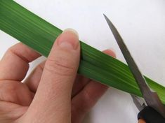 Cut the thick part from the leaf