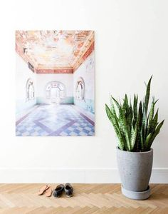 DOMINO:why you're still killing your succulents (and other low-key plants)