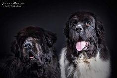 Elvis & Aaron   by Newfoundlandinkoirayhdistys