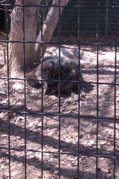 Stoon zoo
