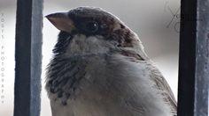 Yogi Macho's Photography (Sparrow) #yogimacho #yogi #yogimanchekar #photography #photographer