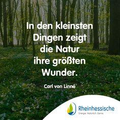 Ihr müsst Euch nur umsehen! #Zitate #Wunder #CarlvonLinne #Natur #Umweltschutz Carl Von Linné, Sports, Environmentalism, Quotes, Nature, Hs Sports, Sport