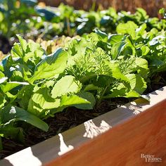 Spinach is some of the easiest and tastiest produce to grow in your own vegetable garden. Learn how to start growing spinach in the spring or fall, what climate and soil conditions it needs to thrive, and when to harvest spinach for peak freshness and taste.