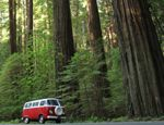 Two Days in Redwood National Park, Humboldt County, California