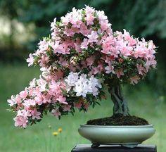☺֍A little #bonsai inspiration for today!☺☼       #BonsaiInspiration