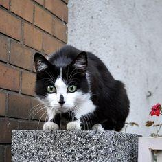 Cat's eyes !!!