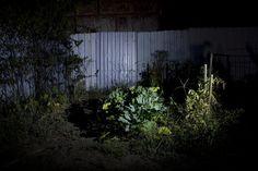garden lights on Behance