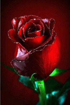 All Gifs made Agababy Juggler © Copyright Rose Flower Wallpaper, Wallpaper Nature Flowers, Beautiful Flowers Wallpapers, Rose Images, Flower Images, Flower Pictures, Beautiful Rose Flowers, Amazing Flowers, Love Flowers
