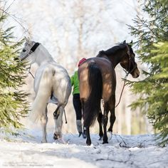 #Hästar på tur. | #Horses