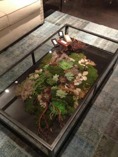 Terrarium coffee table from Four Hands.. #love