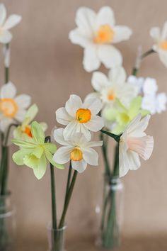Paper Daffodil Tutorial – Design*Sponge