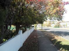 Changing leaves in Stanthorpe, where the seasons are celebrated.