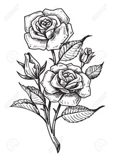 Rose Drawing Discover vector tattoo roses with leaves on white background vector tattoo roses with leaves on white background Stock Vector - 62282891 Rose Drawing Tattoo, Tattoo Design Drawings, Pencil Art Drawings, Art Drawings Sketches, Rose Drawings, Rose Tattoos, Flower Tattoos, Tattoo Roses, Rose Zeichnung Tattoo