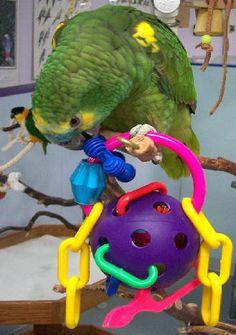 Parrot Toys Scooter World Excite-A-Perch www.parrotislandinc.com