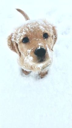 Dogs And Puppies Baby Animals Ideas For 2019 Baby Animals Pictures, Cute Animal Pictures, Animals And Pets, Animals In Snow, Animals Images, Cute Dogs And Puppies, Baby Dogs, Doggies, Puppies Puppies