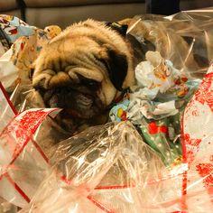 Y así, extenuados, tras cenas, comidas y regalos, cerramos la primera etapa de estas fiestas...  💫Feliz Navidad💫 #navidad #christmas #christmastime #christmasvibes #feliznavidad #merrychristmas #dog #pug #carlino