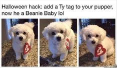 36 Funny Pics of Dogs