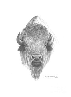 buffalo head drawing - Google Search