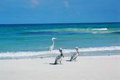 LA PUERTA DEL CIELO  La Reserva de Sian Ka'an que significa puerta del cielo o lugar donde empieza el cielo es un espacio natural protegido y patrimonio por la UNESCO desde 1987.  Se localiza en la costa caribeña del estado de Quintana Roo.