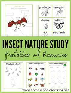 Nature Study Printables - Learning About Bugs Insect Nature Study Printables - Learning About Bugs. A set of free printables from Homeschool CreationsInsect Nature Study Printables - Learning About Bugs. A set of free printables from Homeschool Creations Homeschool Kindergarten, Homeschool Curriculum, Catholic Homeschooling, Homeschooling Resources, Homeschooling Statistics, Preschool Teachers, Kindergarten Reading, Preschool Ideas, Science For Kids