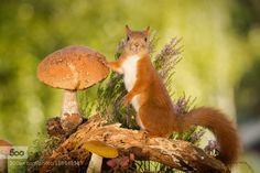 mushroom auction by geertweggen. Please Like http://fb.me/go4photos and Follow @go4fotos Thank You. :-)