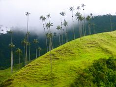 Colombia -  Valle del Cocora  Countryside