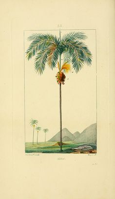 Palm Tree Art, Palm Trees, Dates Tree, Tropical Garden Design, Jungle Pattern, Poster Photography, Leaf Drawing, Watercolor Plants, Vintage Drawing
