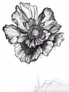 Poppy illustration, black and white, pattern, print, textile design