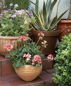 Mix in Texture  To create contrast and visual vibrancy, situate curvaceous containers on stairs and fill with interestingly shaped plants from scallop-leafed geraniums to spiky, serrated agave. Or try combining vertical foliage with one that will spill over the sides to double up on varieties.