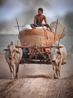 """Cart Driver""  Photograph by Derek Khine"