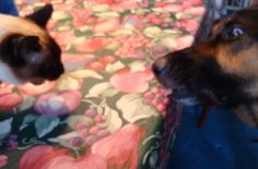 Introducing Cats to Dogs - Cat To Dog Introductions