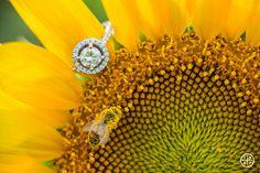 A Sunflower Farm Engagement | Syracuse Wedding Photographer