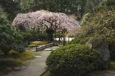 Portland Japanese Garden in the Spring (photos) | OregonLive.com